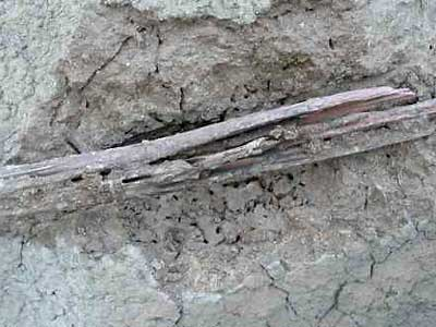 Wood left in termite nests is often eaten form the outside, making it useless for didgeridoo making